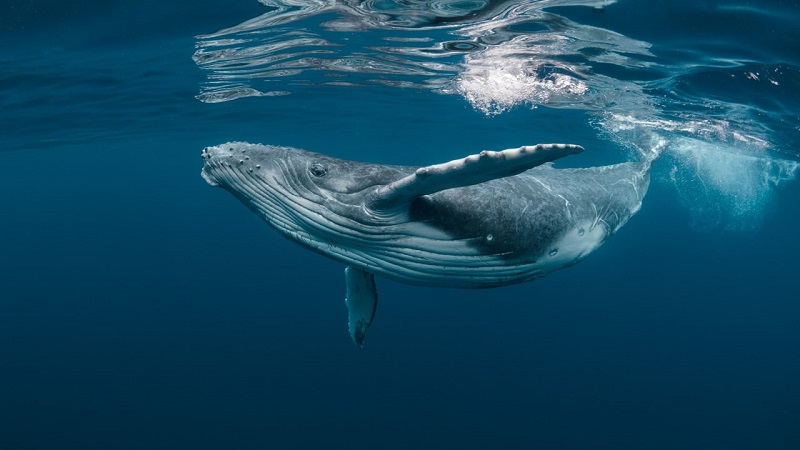 whale_doc.jpg (80 KB)